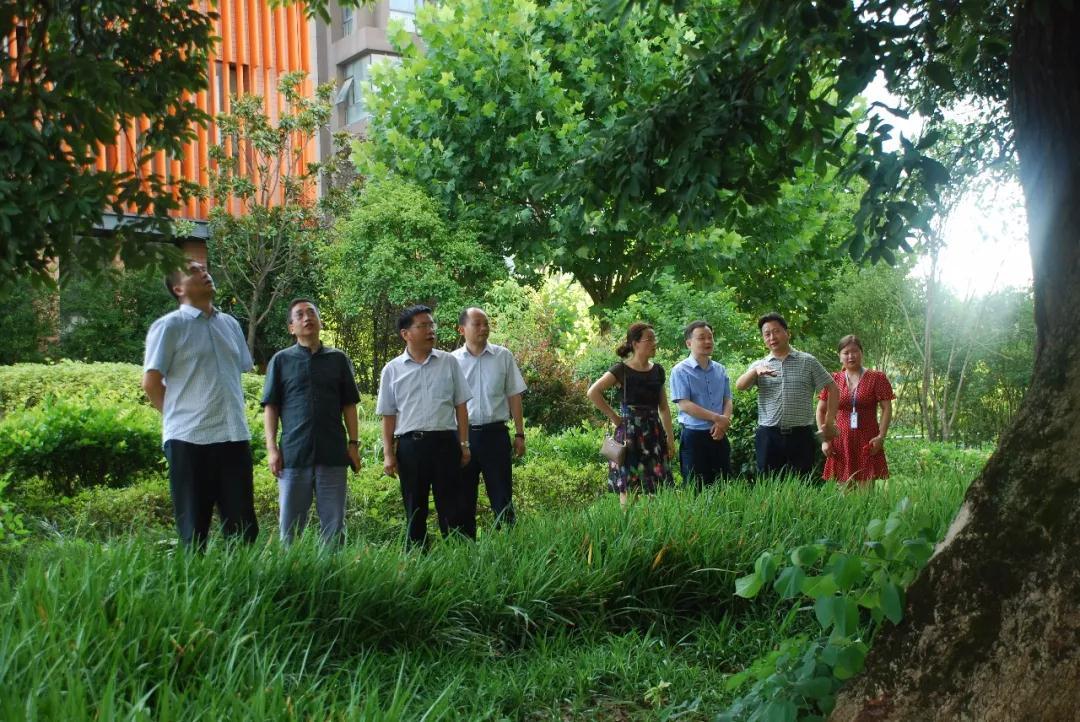 中国铁塔湖北省公司领导参观千年古树群落.jpg